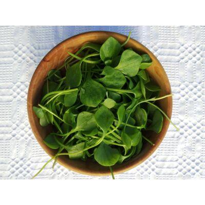 Téli porcsin saláta-20 dkg
