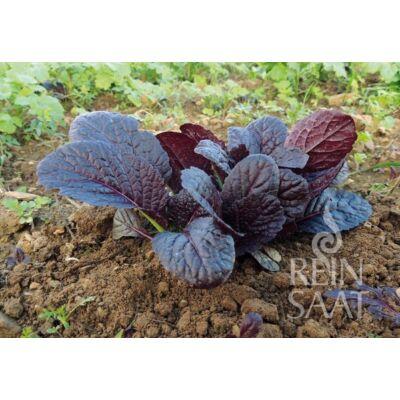 Garnet Giant (Brassica juncea)