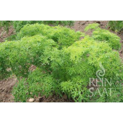 Golden Frills (Brassica juncea)