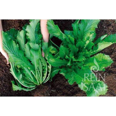 Green in Snow (Brassica juncea var. multiceps)
