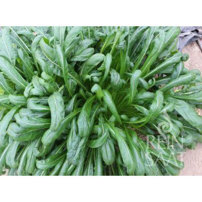 Mibuna (Brassica rapa var. japonica)