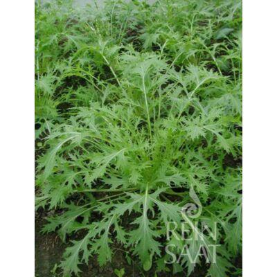 Mizuna  (Brassica rapa var. japonica)