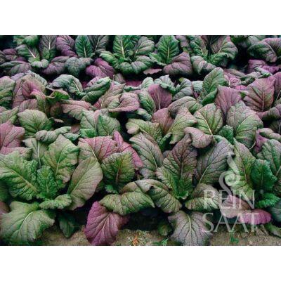 Red Giant (Brassica juncea var. rugosa)