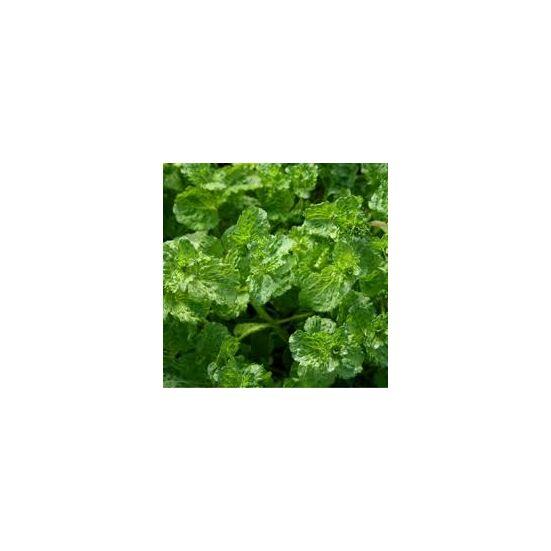 Fodormenta (Mentha spicata)