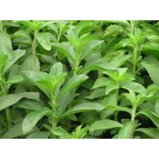 Stevia (Stevia rebaudiana) jázminpakóca, édesfű, édeslevél